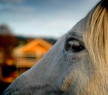 horse-1550514-1278x1126